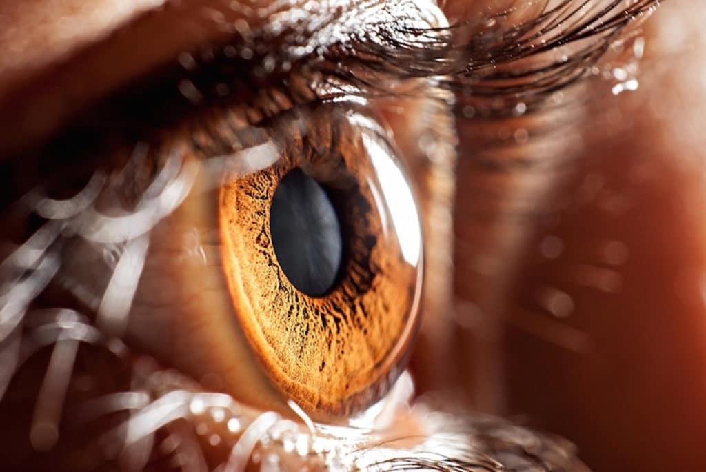Prions Found in the Eyes of Patients with Fatal Brain Disease